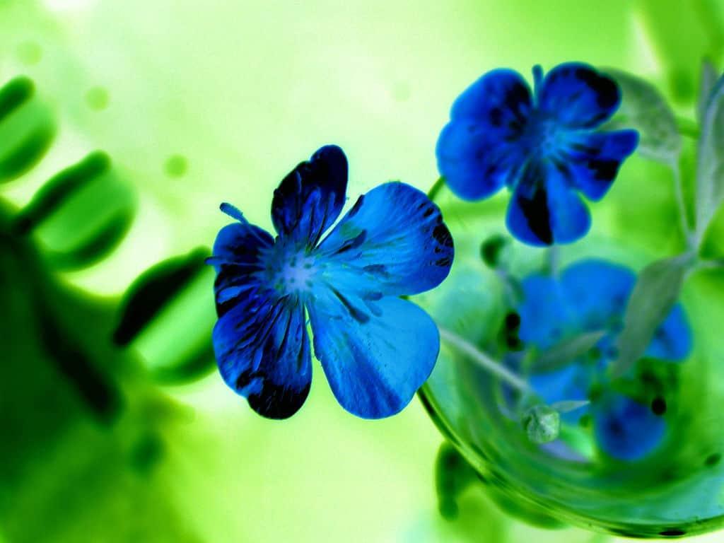 Картинки а4 цветы 8